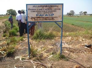 diobass-2-blog-300x224 dans Burkina Faso